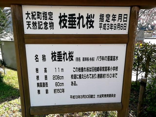 大紀町枝垂れ桜の看板